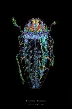 Entomology: Macro Portraits of Insects by Francesco Bagnato