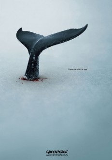 GREENPEACE Whales Poster on Inspirationde