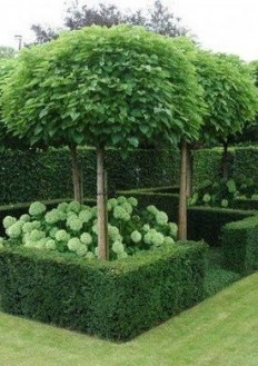 If we can't have hydrangeas, would love something similar. Also really like the tree either for front and or back garden. | gardens | Pinterest