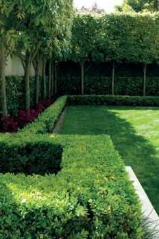 Garden: Pleached Titoki. Layering lawn, hedge, tall thin trees, hedge, wall, works so well!!! | House | Pinterest