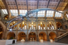 Blue whale at heart of Natural History Museum redesign on Inspirationde