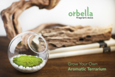 Orbella Fragrant Moss - Clean, Scented Air From An Adorable Terrarium