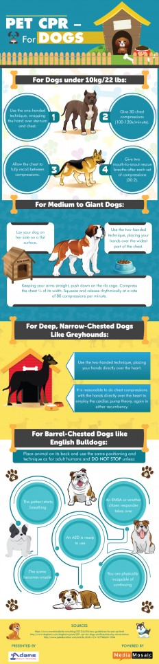 How to Perform CPR for Dogs? - Infographic | Adams Safety