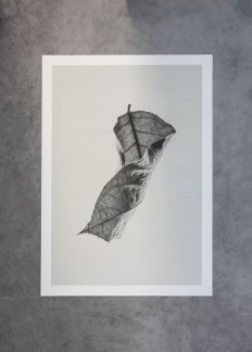 Sabi Leaves Fine Art Prints by Norm Architects and Paper Collective