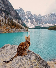 The Adventures of Suki The Cat on Inspirationde