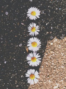 Daisy Wallpapers on Inspirationde