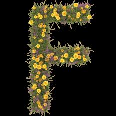 Summer-flower-font-letter-F.png (700×700)
