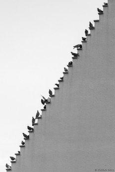 Pigeons Stairs on Inspirationde