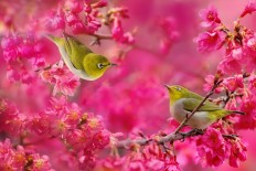 30 Cute Bird Pictures with Most Beautiful Colors | EntertainmentMesh