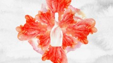 Ruinart Rosé – Damien Lemercier