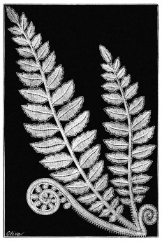 spray-fern-1600.jpg (1080×1600)