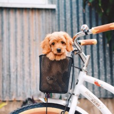 On a bike.. What adventures will we get up too next.. ?? on Inspirationde