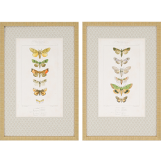 Paragon - Butterflies Pk/2