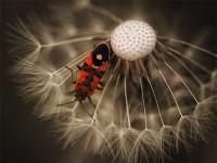 Beautiful Macro Photography for Inspiration   Inspirationi