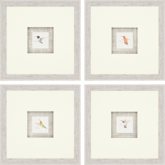 Paragon - Hummingbirds Pk/4