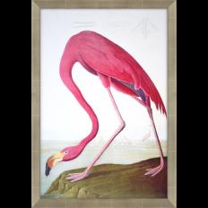Paragon - Flamingo