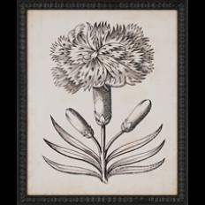 Paragon - Distinguished Floral I