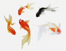 TUMBLR FISH - Szukaj w Google
