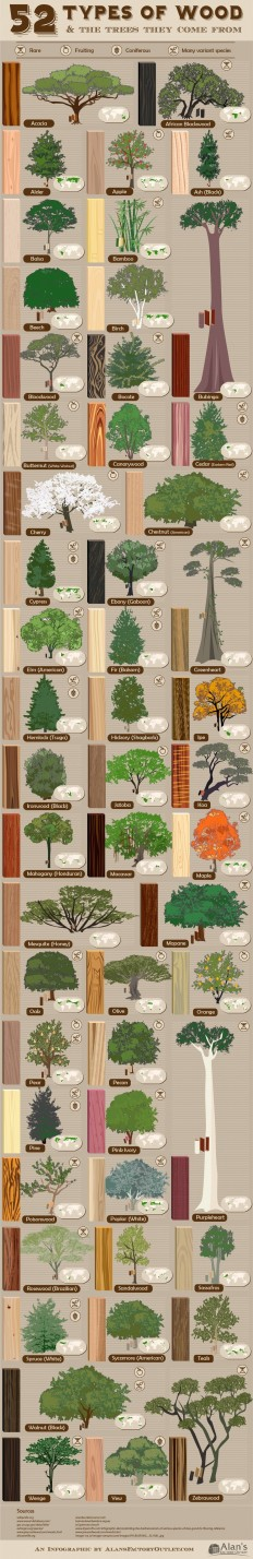 Visual Guide: What the Actual Trees of 52 Different Wood Species Look Like - Core77