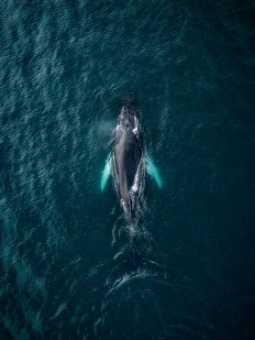 Whales from above by Michael Schauer on Inspirationde