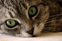 Green Cat Eyes Picture