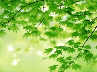 green+leaves.jpg (JPEG Image, 1024 × 768 pixels)