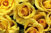 yellow15.jpg (JPEG Image, 600×400 pixels)