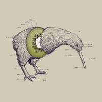 Kiwi Anatomy Art Print by William McDonald | Society6