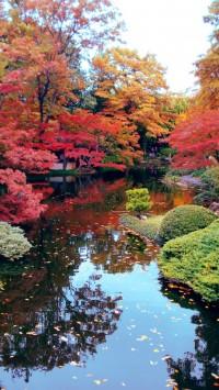 Autum in Japan by ~viridis-somnio