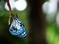 blue by ~sabreclaw