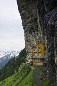 home. / tree house