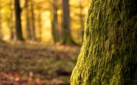 nature,trees nature trees forest plants depth of field 1920x1200 wallpaper – Plants Wallpaper – Free Desktop Wallpaper