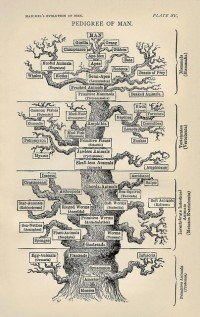 Haeckel's Evolution of Man. Pedigree of Man. | Flickr - Photo Sharing!