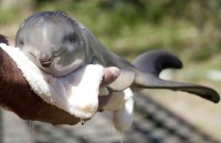 Baby Dolphin Photos: 10-day-old baby dolphin rescued Uruguay | Global Animal