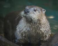 Otter | Flickr - Photo Sharing!