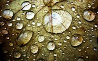 water,leaves water leaves drops macro 2560x1600 wallpaper – Macro Wallpaper – Free Desktop Wallpaper