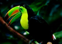 Toucan Sam! | Flickr - Photo Sharing!