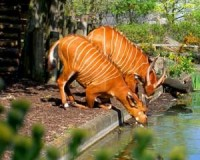 Facts about London Zoo Step by Step How to Guide