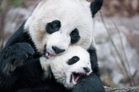 Mother's Love Photos -- National Geographic