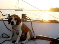 Dog Pictures - National Geographic
