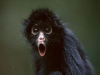 Monkey Pictures - Primate Wallpapers - National Geographic