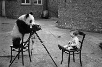 Bettie Brightly • panda photographer