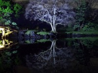 JAPANESE GARDEN REFLECTION 50 by *hirolu