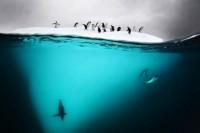 Het mysterie onder water « Froot.nl