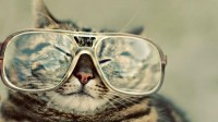 cats,glasses cats glasses hipster large 1920x1080 wallpaper – Cats Wallpaper – Free Desktop Wallpaper