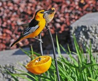 Sharing an orange | Flickr - Photo Sharing!