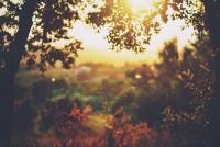 photography / fall fall fall