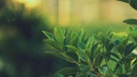 green,leaves green leaves plants macro soft light 1920x1080 wallpaper – Macro Wallpaper – Free Desktop Wallpaper