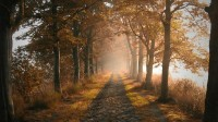 landscapes,nature landscapes nature trees autumn photography roads 1920x1080 wallpaper – Autumn Wallpaper – Free Desktop Wallpaper