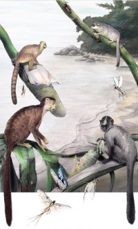 Out of Asia: How Monkey and Ape Ancestors Colonized Africa | Hominid Hunting